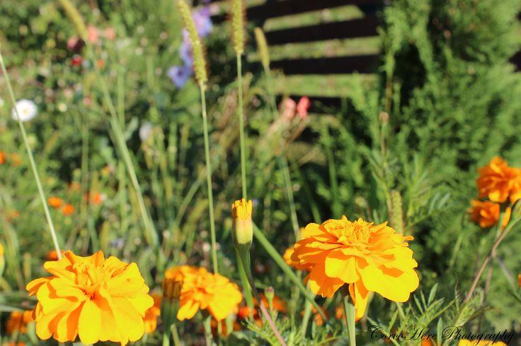 Orange flowers #flowers