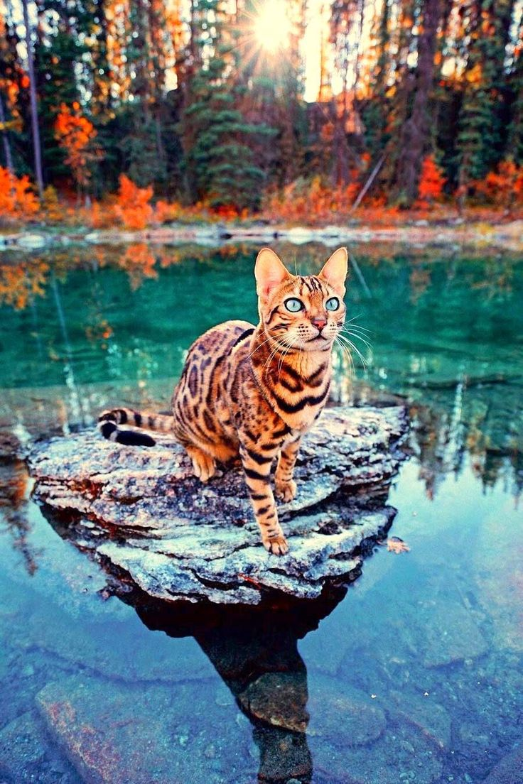 Pretty kitty Pretty cats, Cats, kittens, Animals