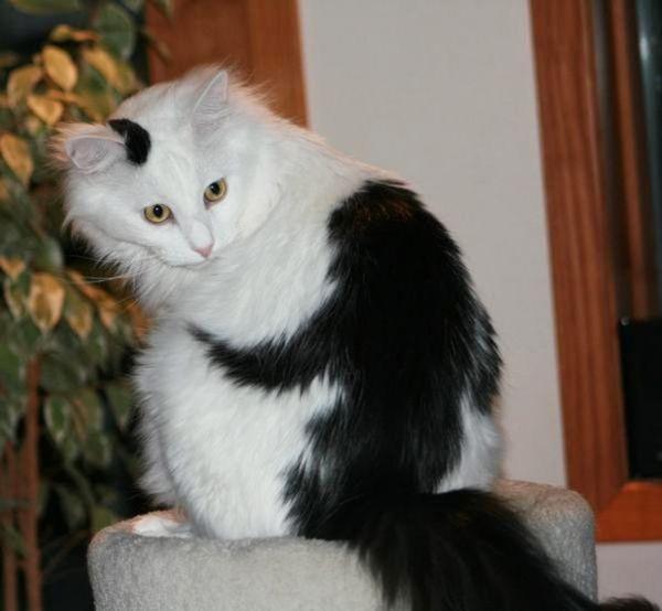 10 Γάτες που ζωγραφίστηκαν από την μητέρα φύση. Εντυπωσιακές. (Φωτογραφίες)