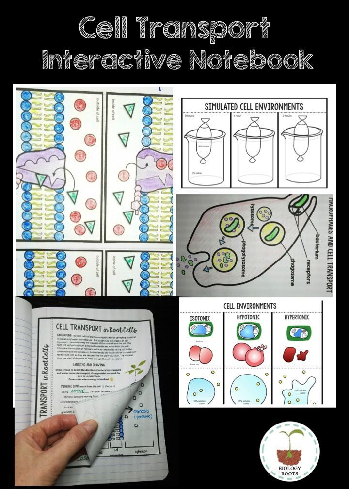 Cell transport interactive notebook. $ This has 25 activities to choose from and covers all things cell transport! Passive transport (facilitated diffusion, simple diffusion, osmosis); active transport (endocytosis, exocytosis, sodium potassium pump)- plus more!