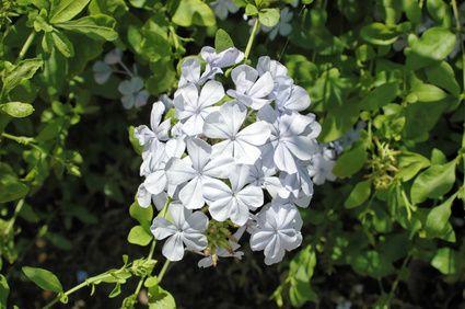 Drought & Shade Tolerant Plants