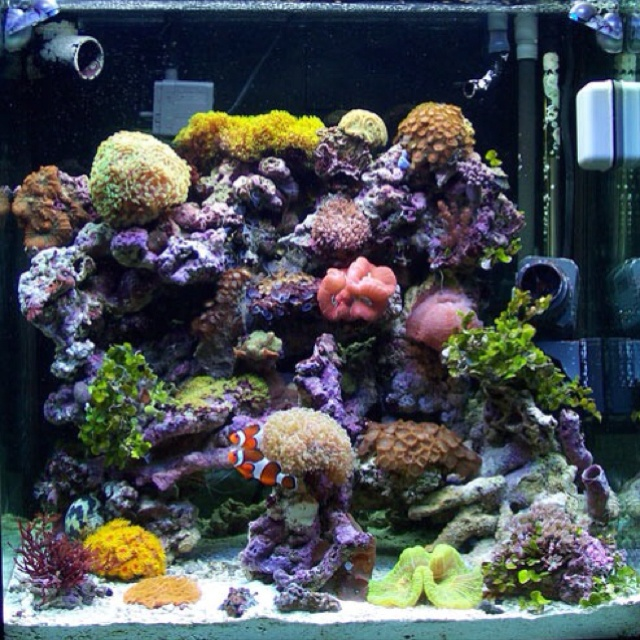 49 best nano reef aquascaping images on pinterest fish for Reef tank fish