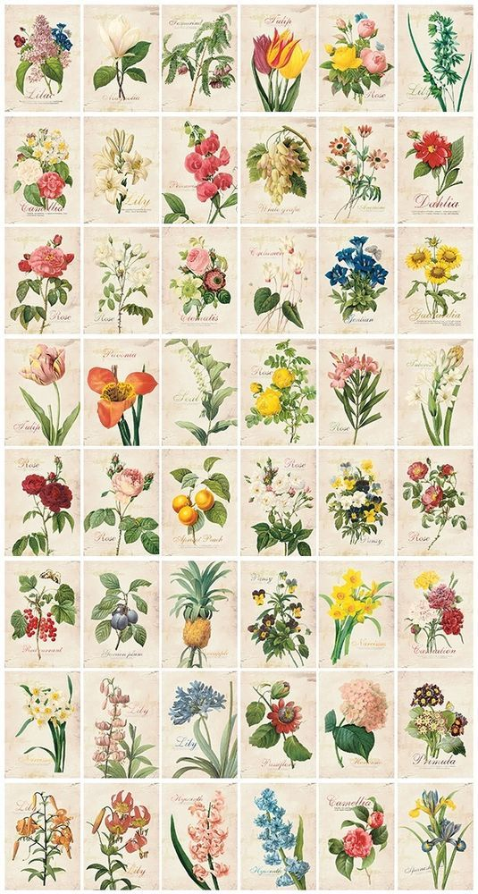 3 packs sticker - Flower, Vintage, Pattern (48 sheet x 3 pack = 144 sheet)