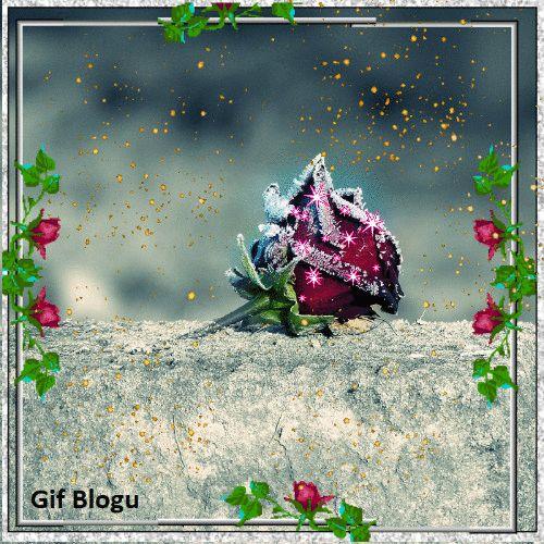 Gif Blogu'ndan ücretsiz indirebilirsiniz... çiçek gif, hareketli çiçek resmi, gül gif, hareketli gül resmi, ücretsiz gif indir, gif blogu