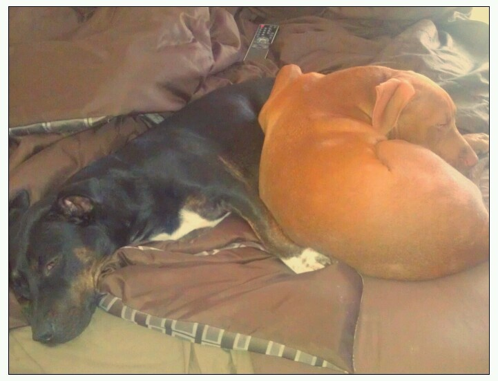 My puppies. Nicky and Cooper on the right. Lazies..