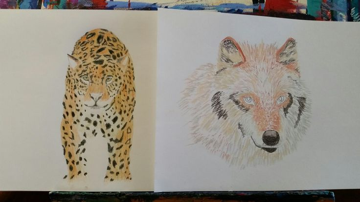 Work in progress on these two. Coloured pencils and pastels. Artist Tracey Lee Art Designs