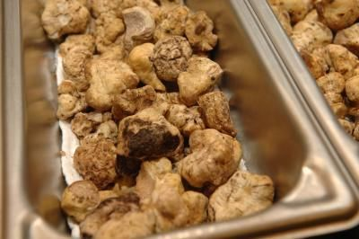 grow white truffles