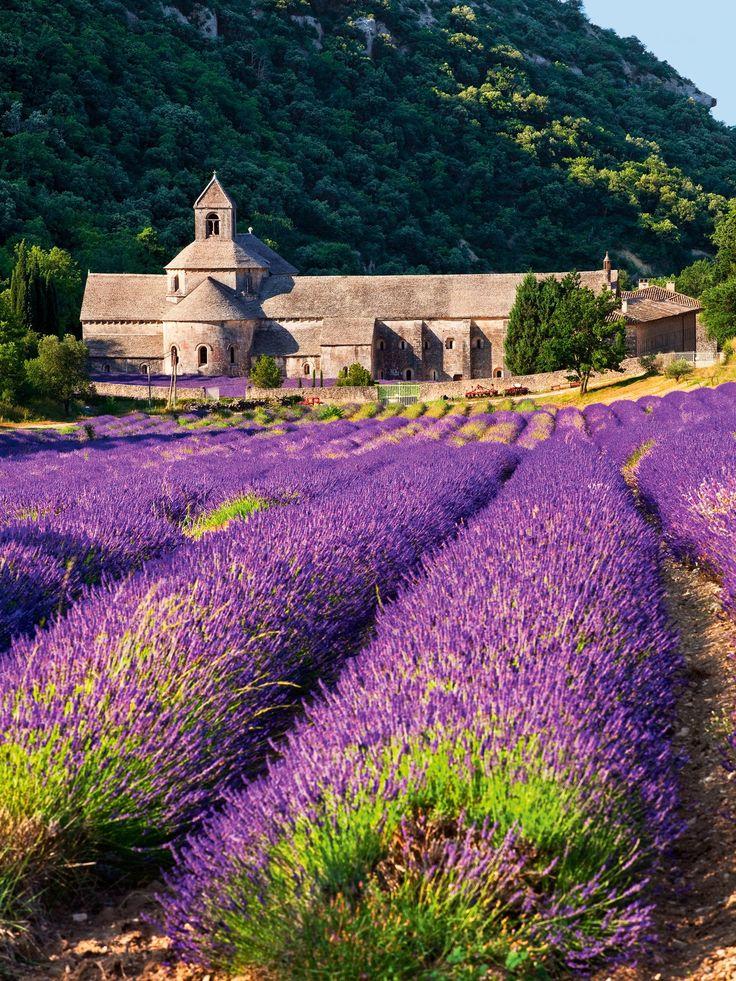 Recorrido desde Aviñón a Aix-en-Provence ·La abadía de Sénanque  Los itinerarios guiados por este monasterio cisterciense visitan el claustro románico y las estancias del siglo XII.
