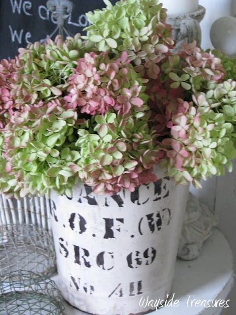 love this bucketGardening Hydrangeas, Beautiful Flower, Favorite Flora, Flowers Trees'S Backyards, Favorite Hydrangeas, Flower Flower, Heavens Hydrangeas, Beautiful Things, Favorite Flower