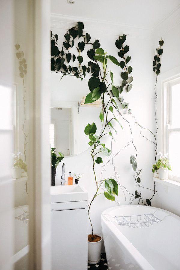 Low light bathroom plants