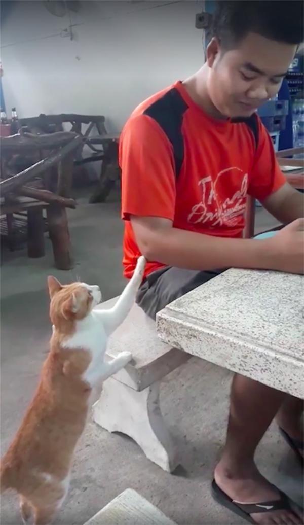 Terkenal Berandal Ternyata Kocheng Oren Juga Bisa Sopan Lo Ini 8 Sikapnya Yang Patut Dicontoh D Kucing Anak Kucing Hewan