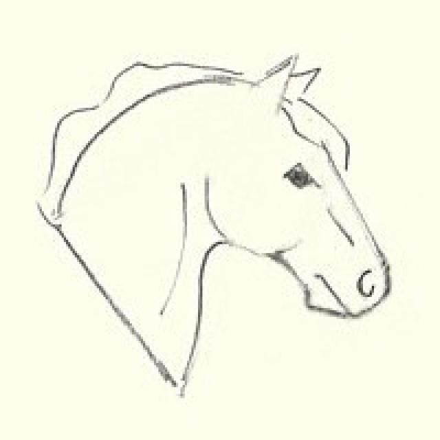How to Draw a Horse's Head for Beginners: Finishing the Drawing
