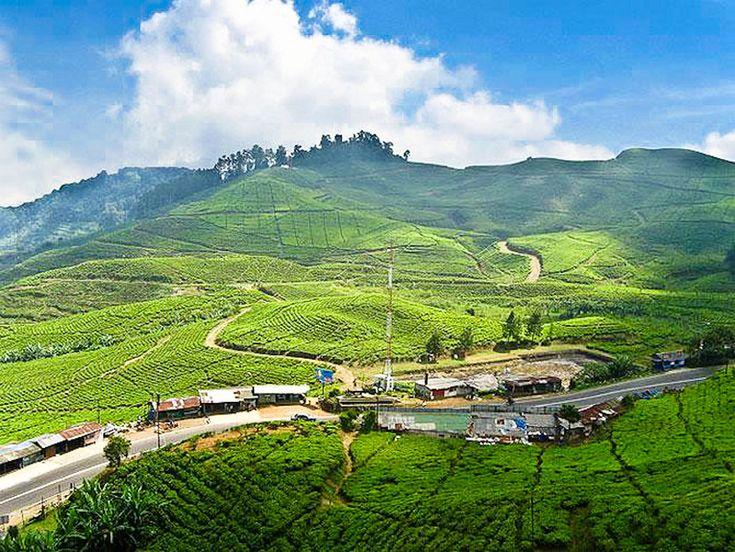 Tee plantage Bandung