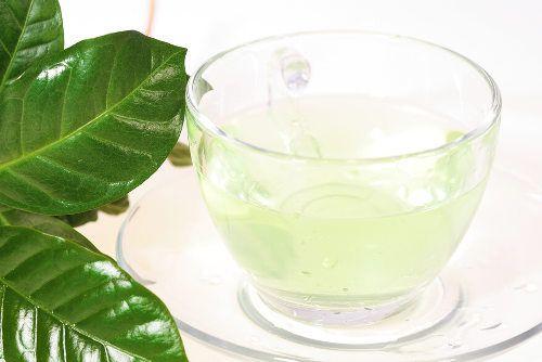 Propiedades y beneficios del té blanco