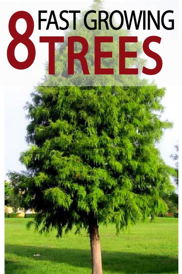 8 Fastest Growing Trees Garden Lovin Fast Growing Trees Fast