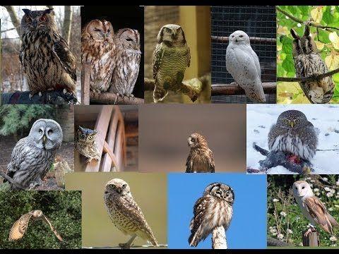 los sonidos de las aves de la noche y sus imágenes .Canto de aves - YouTube