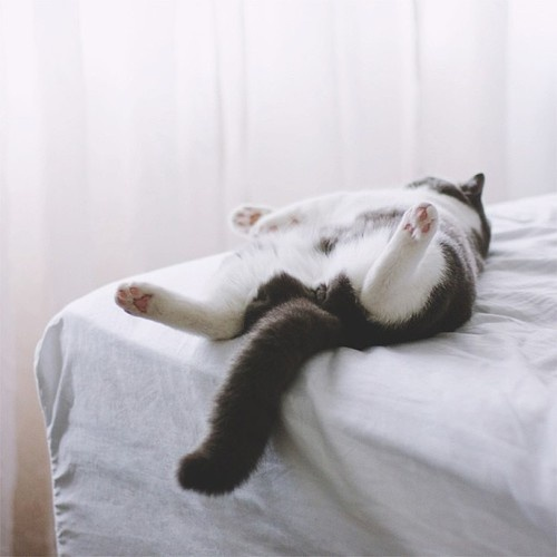 Pin By Selen Boyacigil On Mood Grey And White Cat Cute Cats White Cats