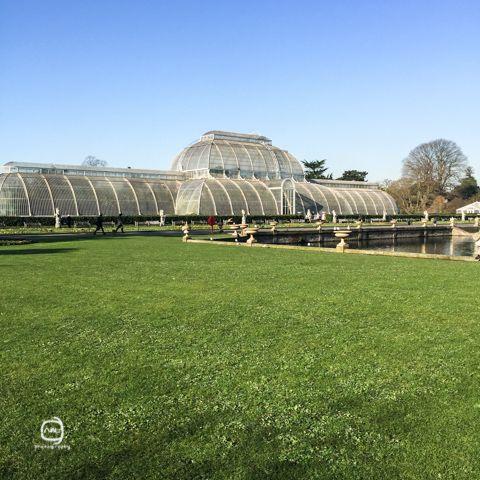 nalblog.com nalブログ。写真と旅と言葉たち 春の風景世界遺産英国キュー・ガーデンでまったり 早朝ディストリクト線リッチモンド行きのチューブに乗ってたどり着いたのはキュー・ガーデン駅。今日は王立植物園、世界遺産にもなっているキュー・ガーデンを散策します。朝食がまだだったので降車駅すぐ横のカフェでモーニングを。薄いトースト、目玉焼き、分厚いベーコンのシンプルな朝食。 ソイラテとあわせて£12ほどでした。 腹ごしらえを澄ませ、キュー・ガーデンに向かいます。駅からキュー・ガーデンの入り口までは徒歩5、6分です。入り口で入場料を払います。チケットはオンラインで買う方がお得だそうですが、この日は当日窓口で購入。募金が付いた方のチケットを購入しました。入って東へ向かっていくとおなじみのあの建物が見えてきます。こちら側からまわろうと思っていましたが、どうやら逆光っぽかったので西回りで歩いていくことに。…