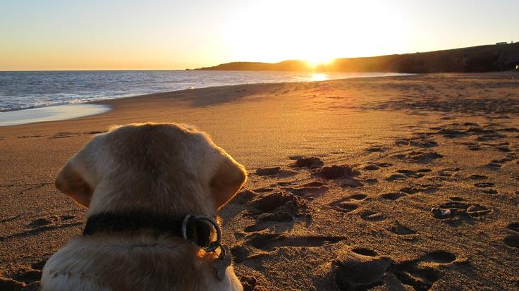 zen toto contemplating sunset