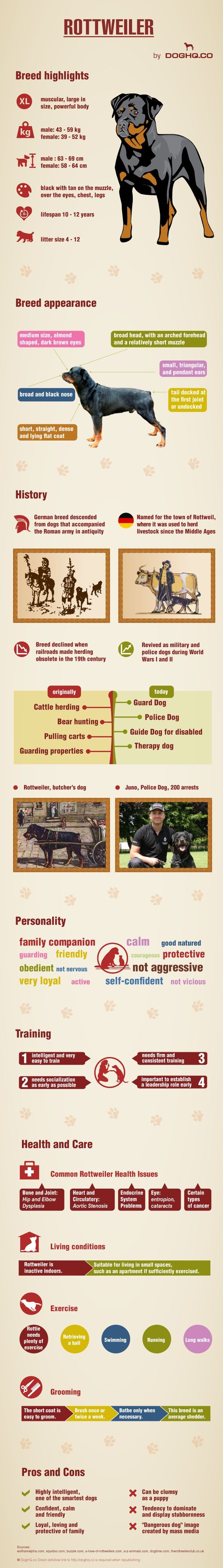 DogHQ presents the following infographic that provides everything you ever wanted to know about the Rottweiler canine breed, which highlights Rottweiler breed facts and trivia.
