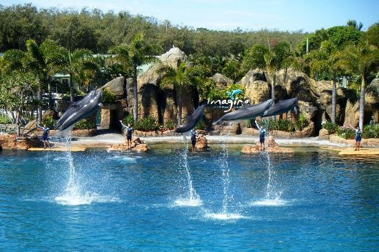 Sea World: Show with dolphins #Australia #GoldCoast http://www.tripadvisor.com.au/ShowForum-g255337-i929-Gold_Coast_Queensland.html