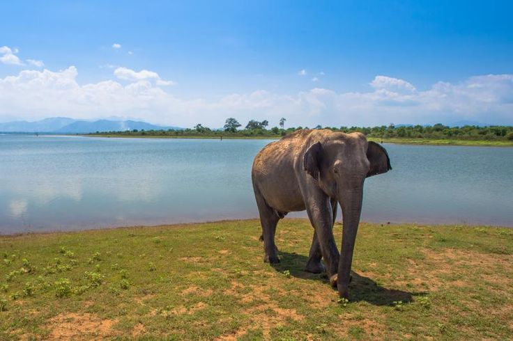 Sri Lankan elephant - 12 of the world's cheapest holiday destinations for 2016