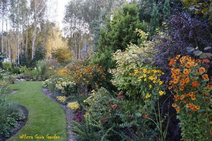 Autumn beauty...hot colours...