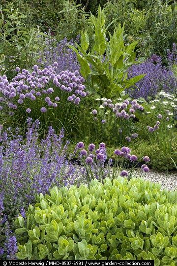 Schöne Farben ....Sedum, Nepeta, Allium schoenoprasum, Dipsacus, Nigella - Locus Flevum ...May Garden Story
