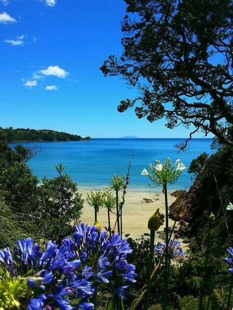 Waiheke Island. New Zealand