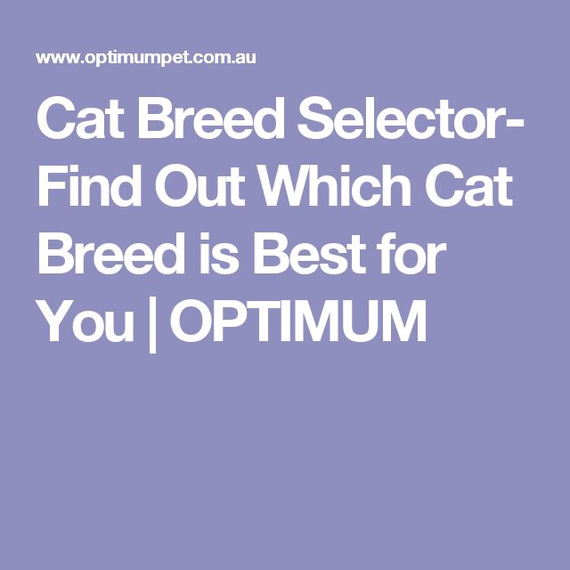Cat Breed Selector- Find Out Which Cat Breed is Best for You | OPTIMUM