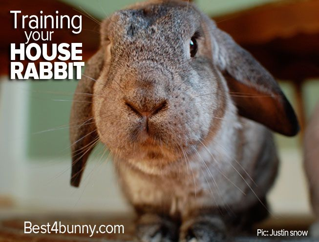 Top tips to help train your house rabbit. Follow our easy advice to help your rabbit learn quickly what the do's & don'ts are around the house.
