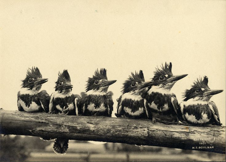 Six of the frowzy-headed Fishers in a pose