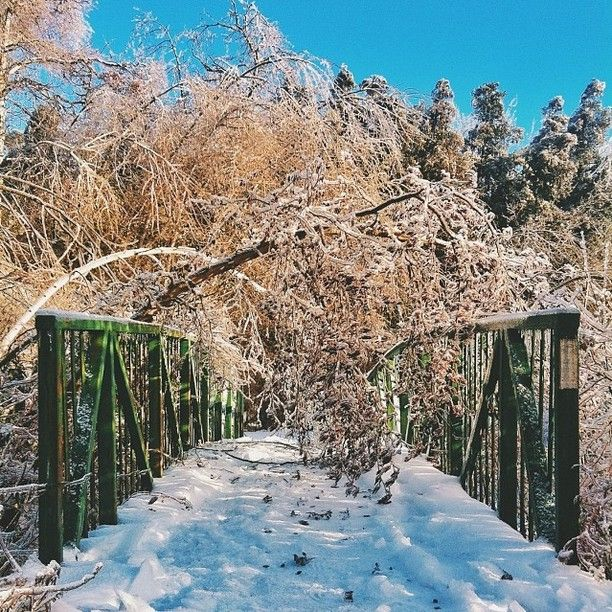 Photo of the trees after the ice storm photo credit to instagram user sinsintome #icestorm #toronto