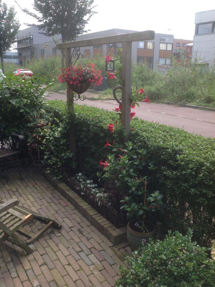 Sundaville heeft de winter overleefd en staat nu in bloei