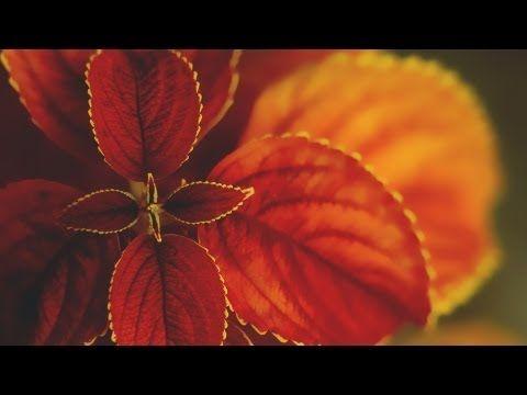 Karunesh - Call of the Mystic (Beautiful Relaxation Music) [Full album + tracklist] - YouTube