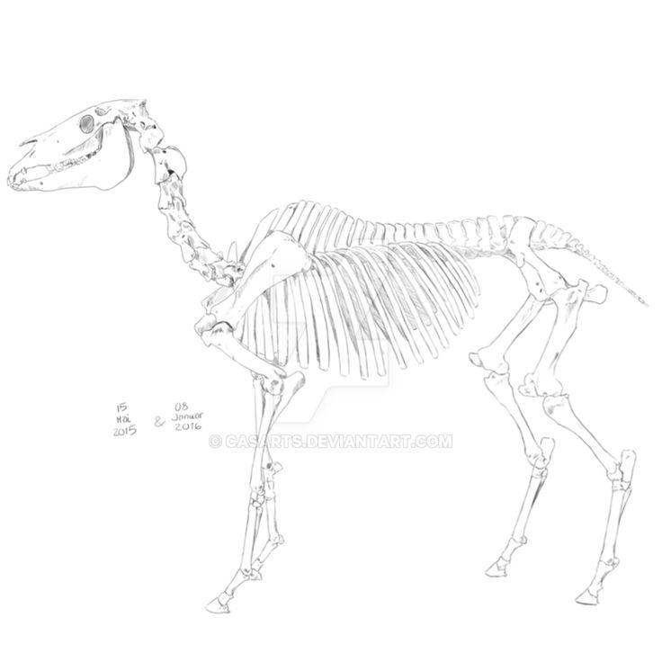 horse_skeleton_by_casarts-d9wnt2f.png 894 × 894 bildepunkter