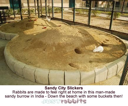 Sandy City Slickers - Rabbits are made to feel right at home in this man made sandy rabbit burrow in India. Better get down the beach with my bucket and spade then!
