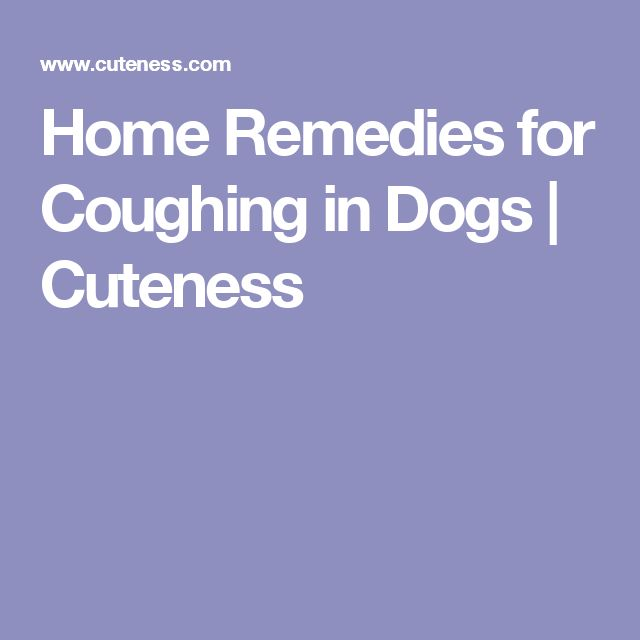 Home Remedies for Coughing in Dogs | Cuteness