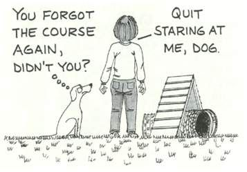 Dog Quotes / Agility                                                                                                                                                      More
