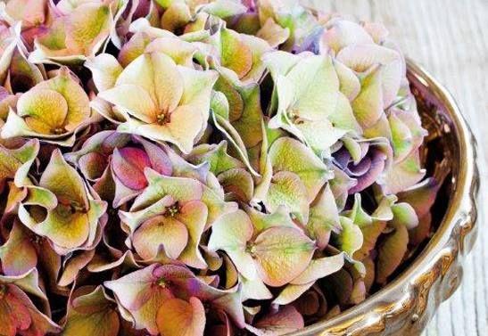 Hydrangeas www.vandijkbloemen.nl