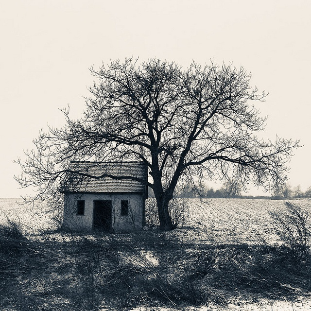 Hungary: puszta in winter - welcome to the plains!