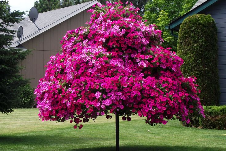 This petunia tree was made with steel poles and pots to create the illusion of a standard form petunia