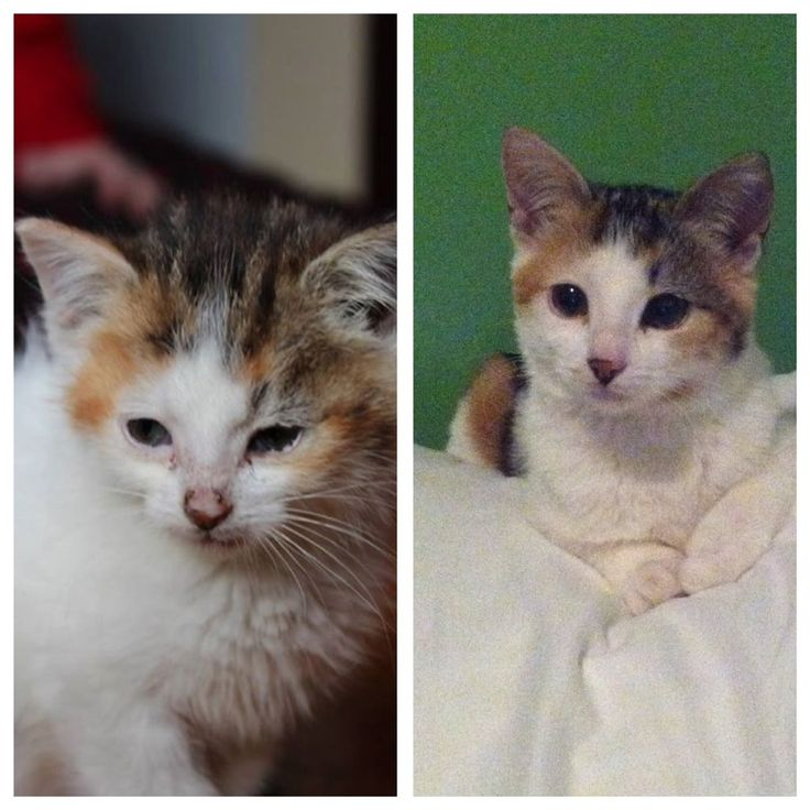 29 Before And After Photos Show What Love Does To Cats