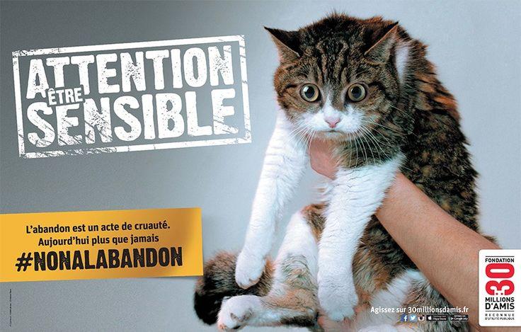 Dites non à l'abandon d'êtres sensibles avec 30 Millions d'Amis ! - Cause animale - Wamiz