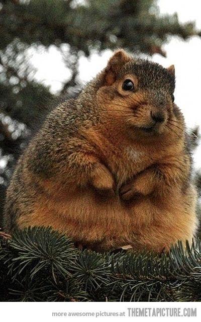 I'm not fat, I'm just full of love…