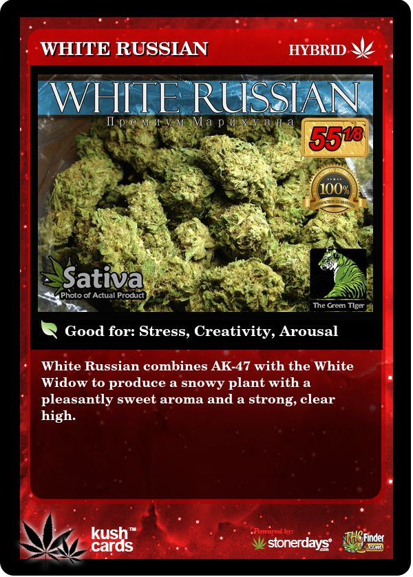 White Russian | Repined By 5280mosli.com | Organic Cannabis College | Top Shelf Marijuana | High Quality Shatter