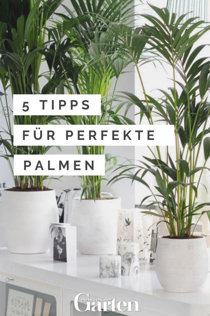 Palmen Pflege 5 Tipps Fur Perfekte Pflanzen Mit Bildern Palme Pflege Palmen Pflanzen Pflanzen