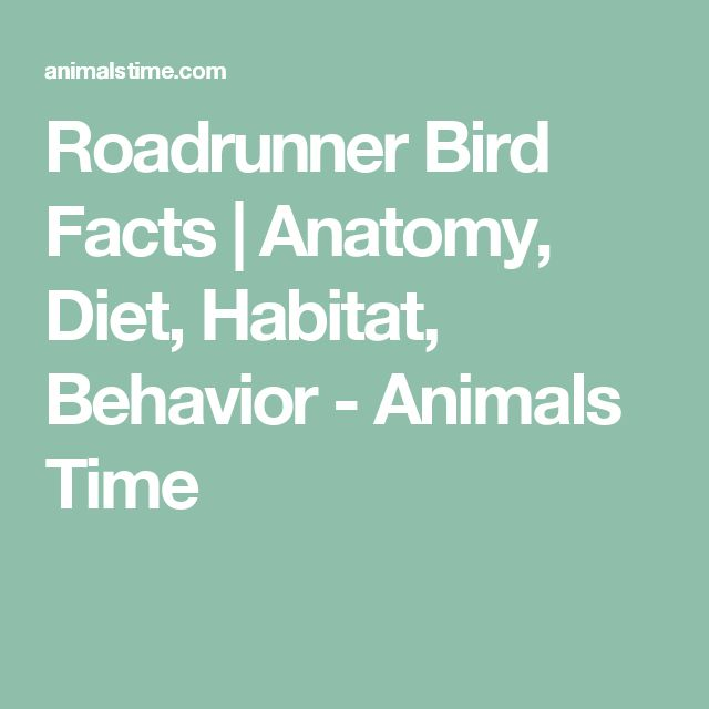 Roadrunner Bird Facts | Anatomy, Diet, Habitat, Behavior - Animals Time