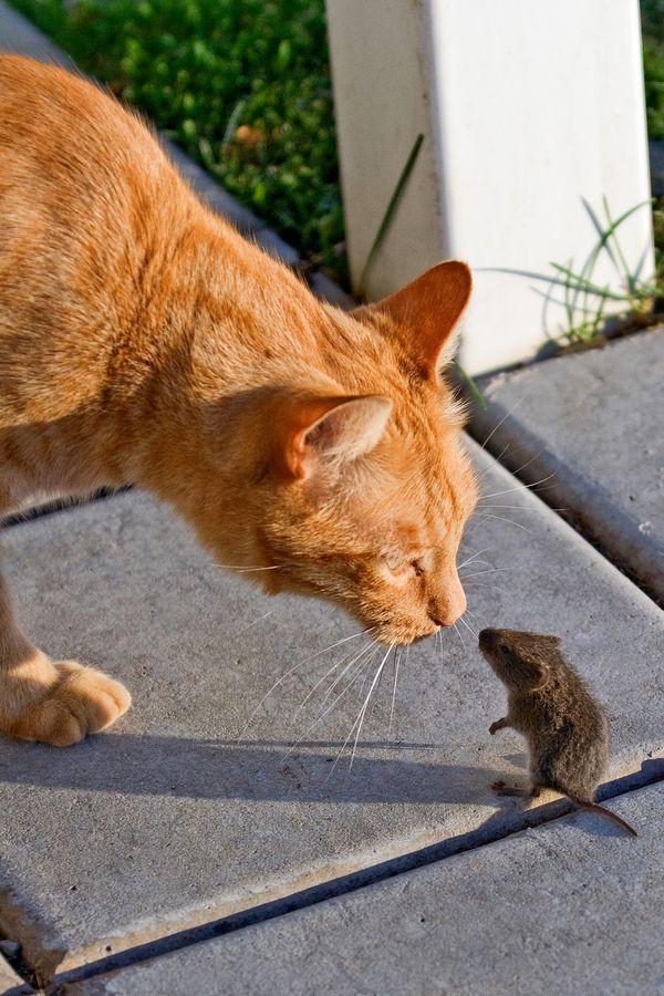 Quand  Garfield discute avec Ratatouille...