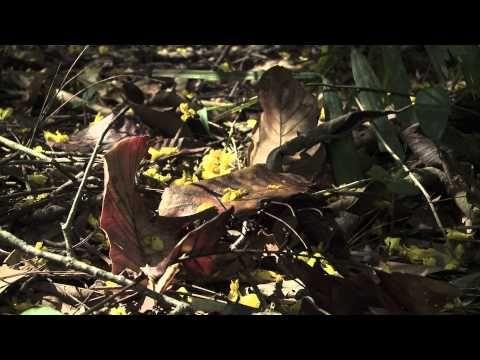 Episode 05 : La formation des sols - YouTube